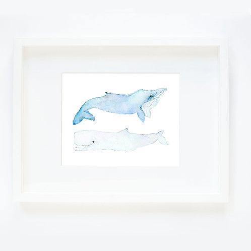 Whales 2 a