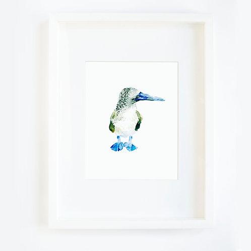 Blue Foot Bird 1