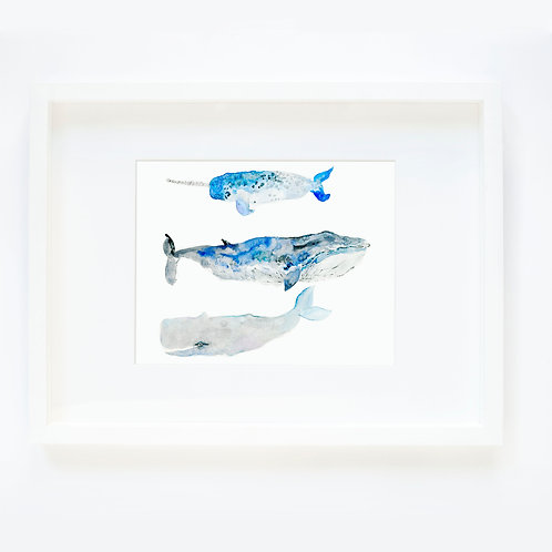 Whales 3