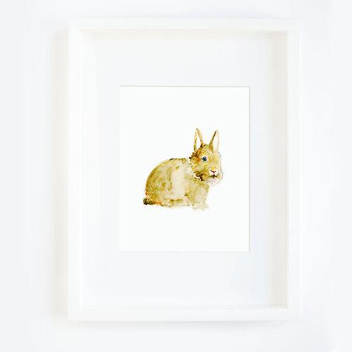 Bunny Fat