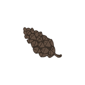 Pine Cone 5