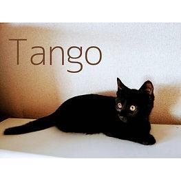 1.Tango.jpg