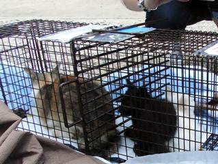 神戸獣医師会 のら猫の繁殖制限事業