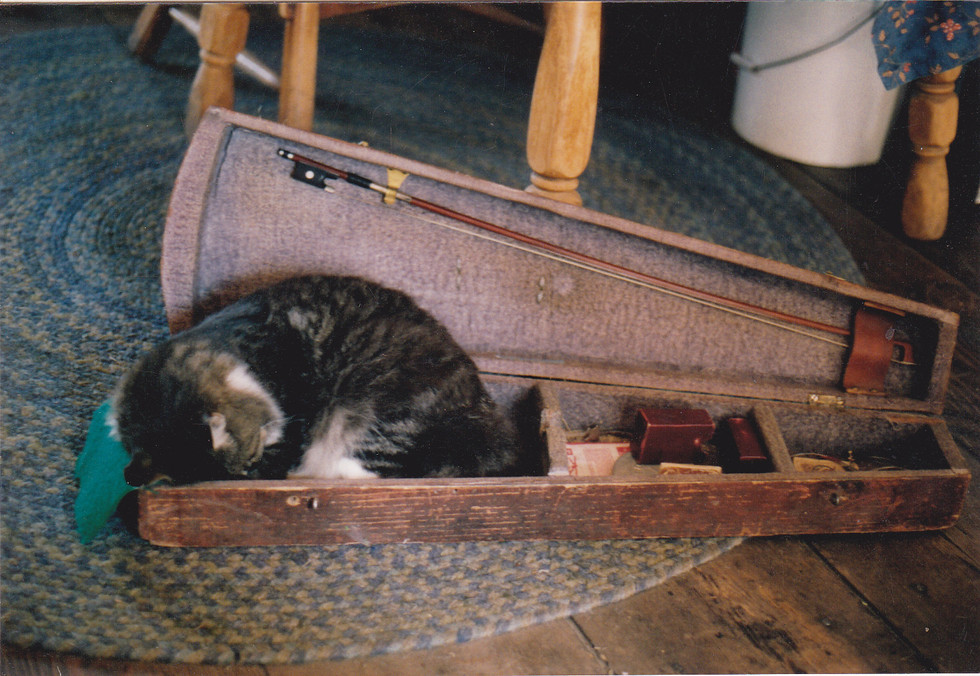 Fiddlin' Red's cat snoozing in a fiddle case from the 1800s.