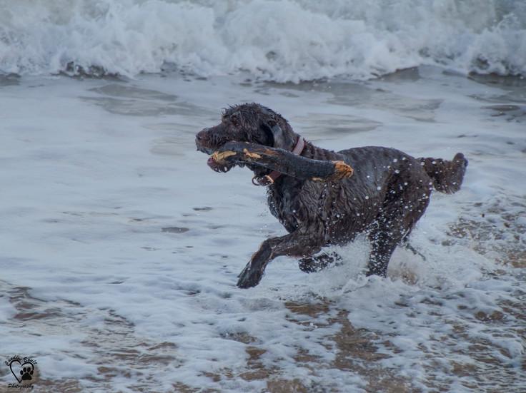 Sea dog.jpg