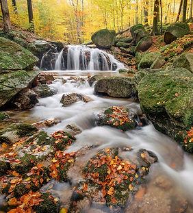 autumn-5888546_1920_edited.jpg