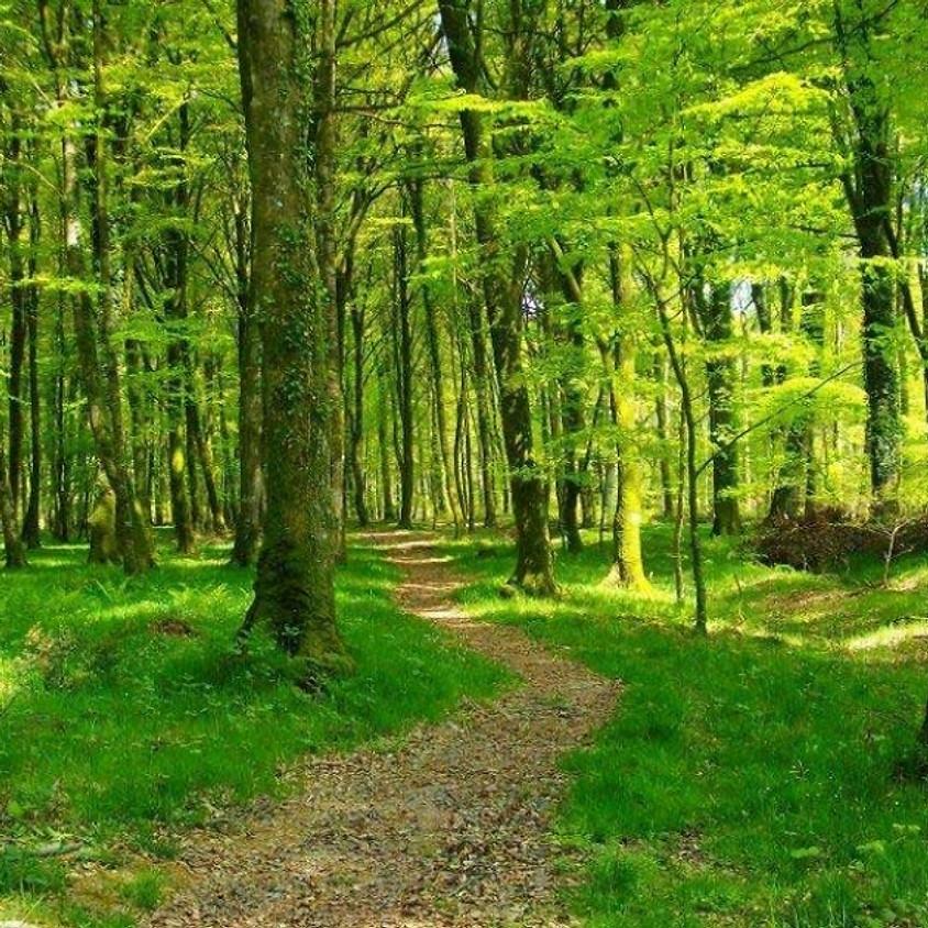 """Stage """"Bain de forêt"""""""