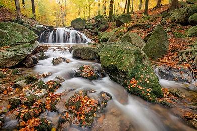 autumn-5888546_1920.jpg