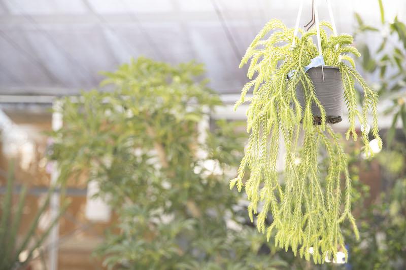 岐阜 観葉植物 名古屋 グリーン 植木鉢 7