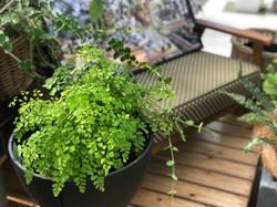 植物 美濃加茂
