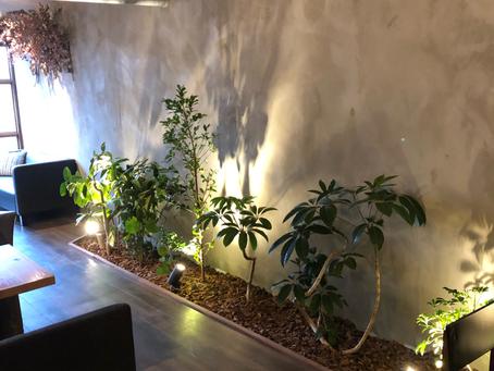 豊田市のカフェの観葉植物入れ替え
