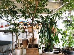 オフィス 観葉植物の森 ハンギングプランツ