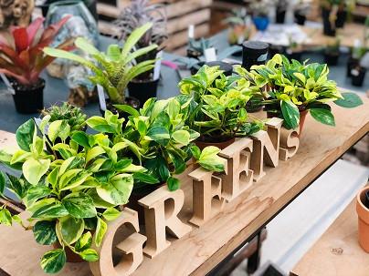 GREENsHOUSE 新入荷の観葉植物!