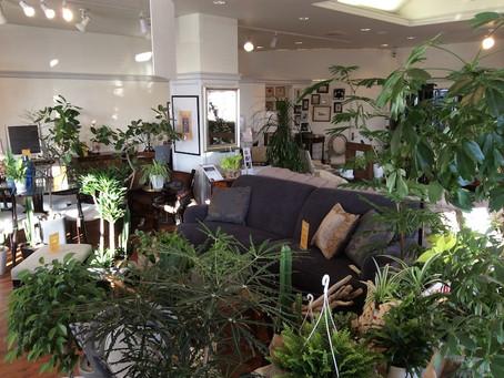 Interior Green Market
