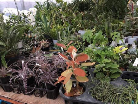 GREENs HOUSE 販売用植物