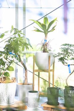 岐阜 観葉植物 名古屋 グリーン 植木鉢 3