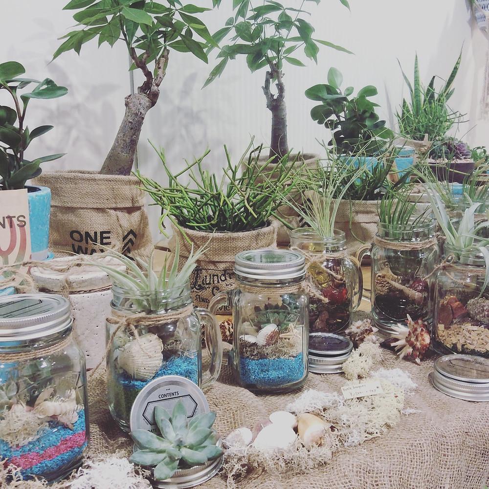 観葉植物・委託販売・名古屋金山Hermans
