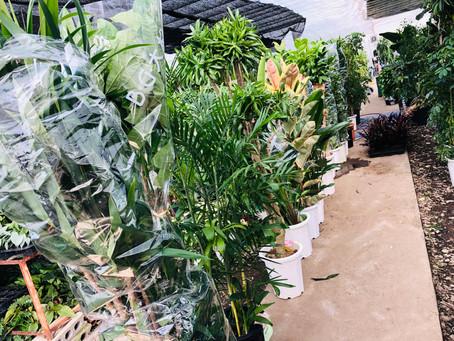観葉植物仕入れ