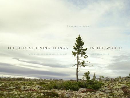 レイチェル・サスマン「世界最高齢の植物たち」