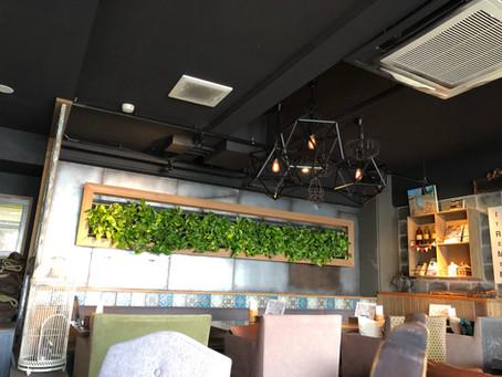 岡崎市のカフェの観葉植物入れ替え