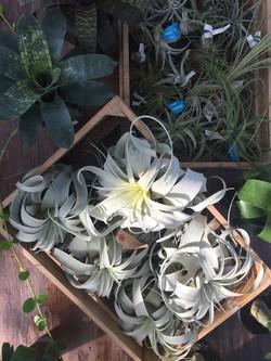 岐阜 観葉植物 グリーンズハウス