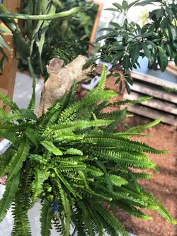 植物 ショップ