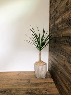 オープンハウス・スポットレンタル・観葉植物