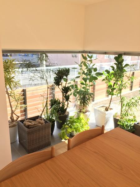 稲沢_neie様 モデルルーム・屋内観葉植物