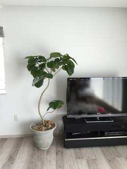 新築住宅 観葉植物コーディネート③