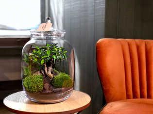 NanoGarden Wide Medium con bonsai