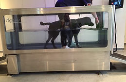 Bolt treadmill.jpg