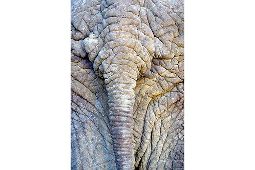 Elefantenhaut, Bilder Weltreise, Bilder rund um die Welt, Bilder Reisebüros,