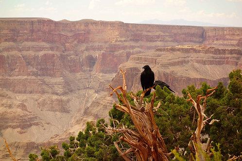 Grand Canyon Foto mit Vogel, Grand Canyon Tiere Bild, Tierwelt Grand Canyon Bilder,