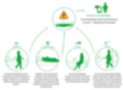 Emfit Care vuorokausikaavio.jpg