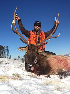 Western Montana Elk Hunt