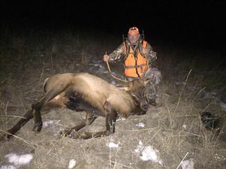 Bull elk hunt montana.jpg