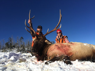 Bull Elk Hunt Western Montana.jpg