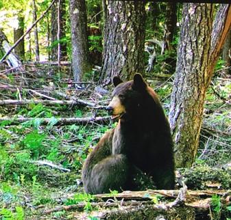 Hershey Bear '17.jpg