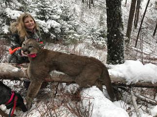 Guided Mountain Lion Hunt.jpg