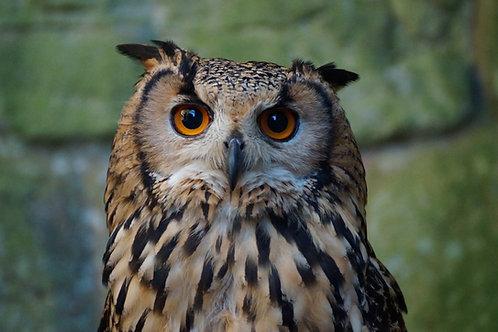 Sponsor the Owls