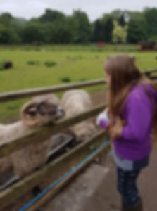 Amber with the Sheep