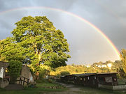 Brockswood Rainbow
