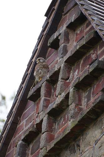 Bird sightings at Brockswood