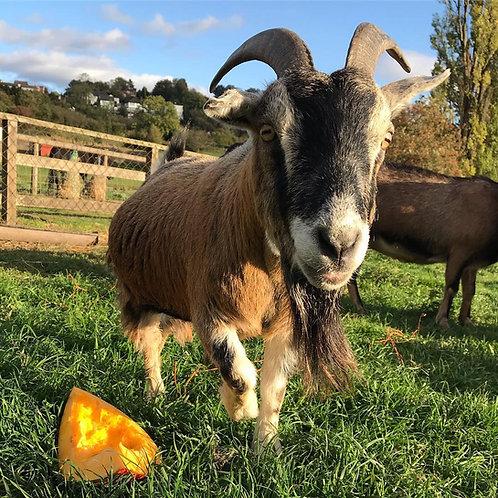 Sponsor the Goats