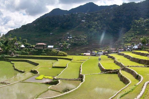 필리핀 여행지추천 코르디예라(Cordilleras) 의 Banaue 바나우에 라이스테라스 필리핀 관광명소