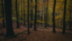 home-forest-slide3_edited.jpg