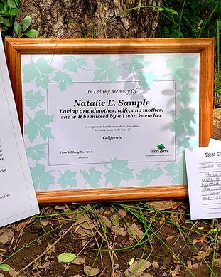 Framed certificate of a memorial tree planting gift