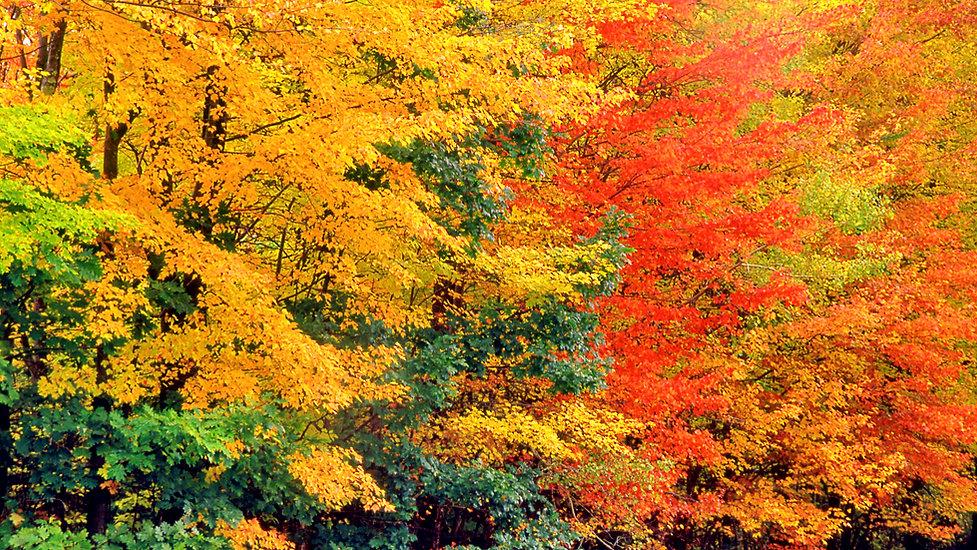 bright-fall-foliage_edited.jpg