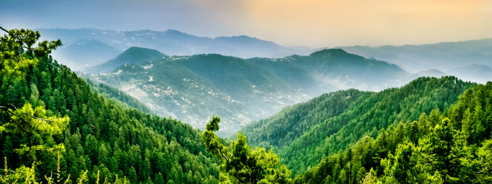 forest pakistan.png