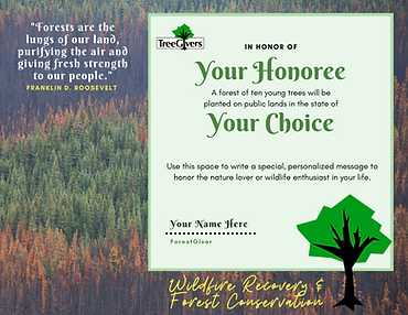 Wildfire Recovery and Forest Conservatio